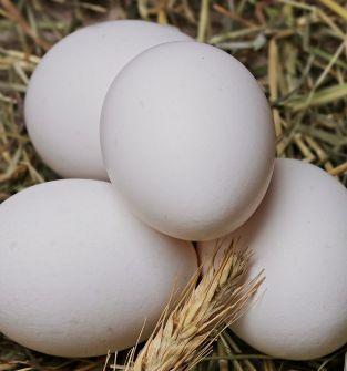 Wiejskie jaja od kur z wolnego wybiegu